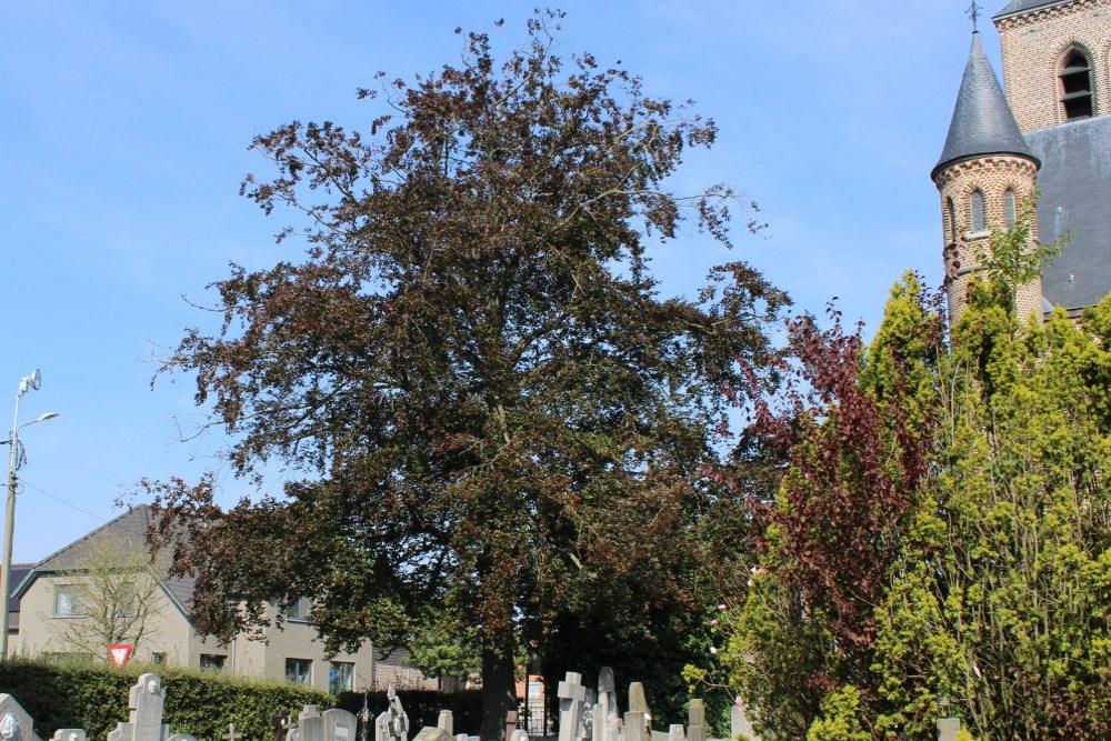 Peace Tree Schakkebroek
