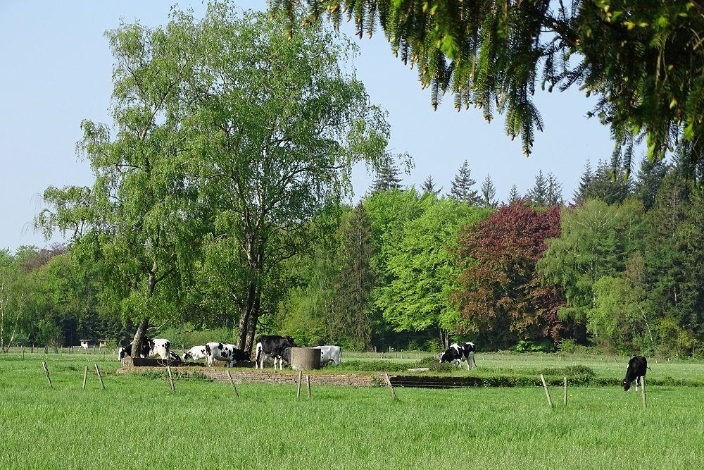 Stellung Fox Fliegerhorst Twente