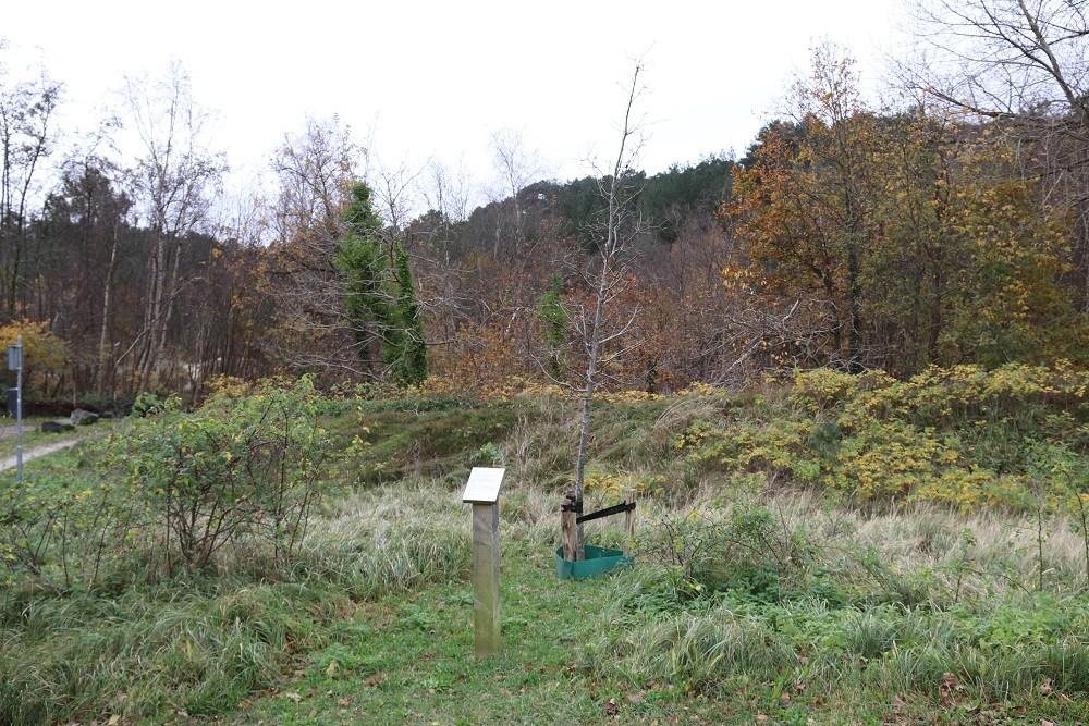 Tree Mirjam Ohringer Schoorl