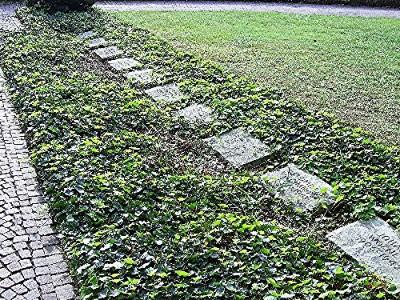 Graven Dwangarbeiders Mesum