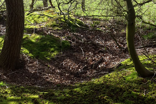 Slit trenches and Anti Tank Ditch Heiloo Woods