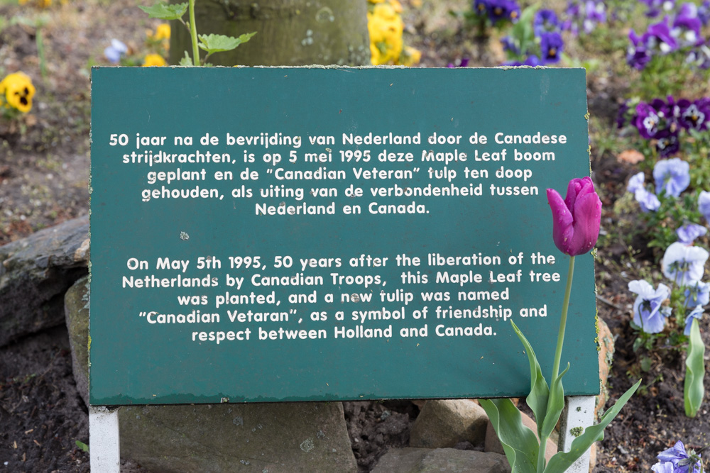 Bevrijdingsboom Nijmegen