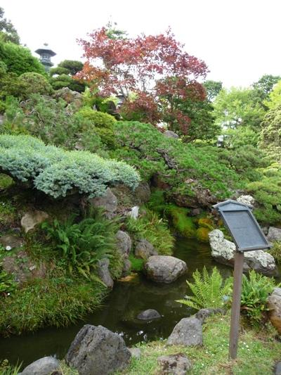 Dwergbomencollectie Japanse Theetuin