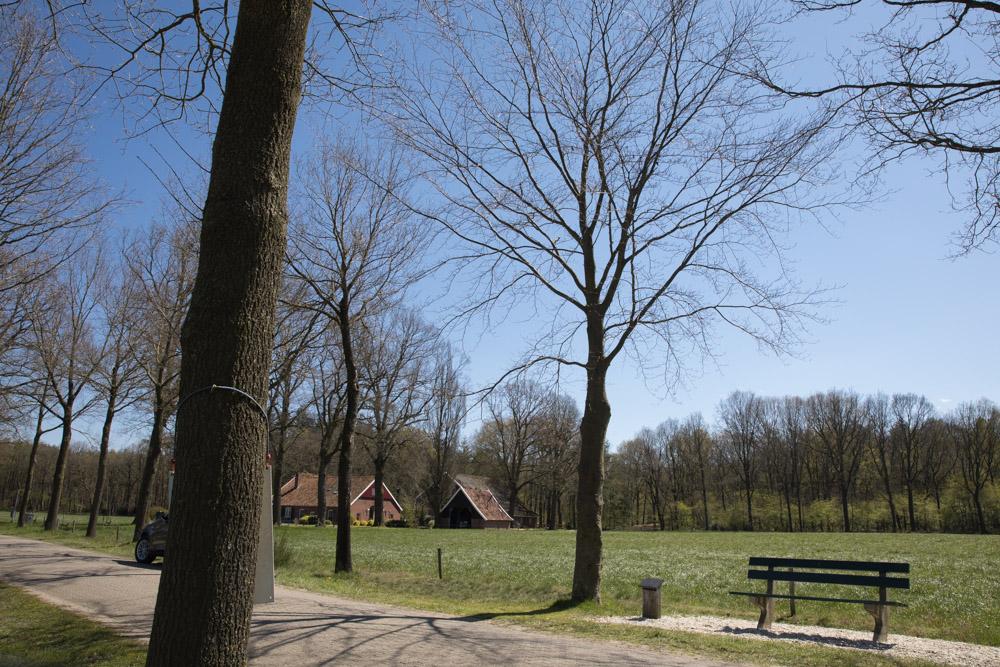 Commemorative Tree Korenburgerveen