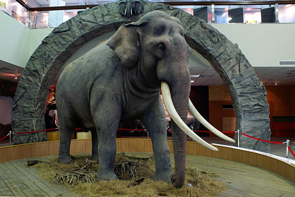 War Elephant Lin Wang
