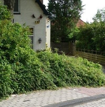 Stumbling Stones Brielseweg 1