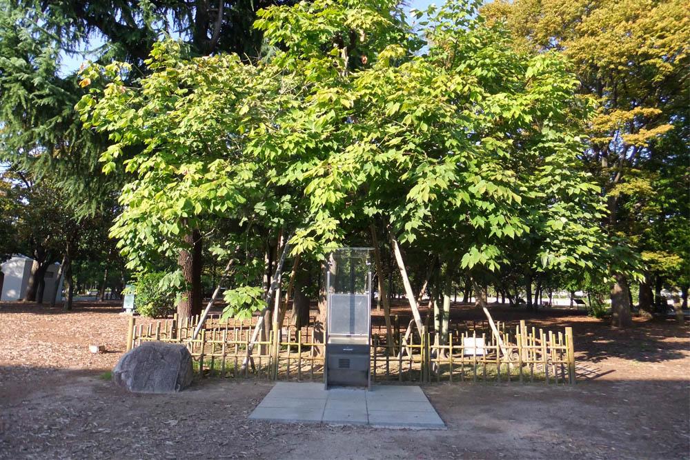 Atomic Bomb Tree Hiroshima
