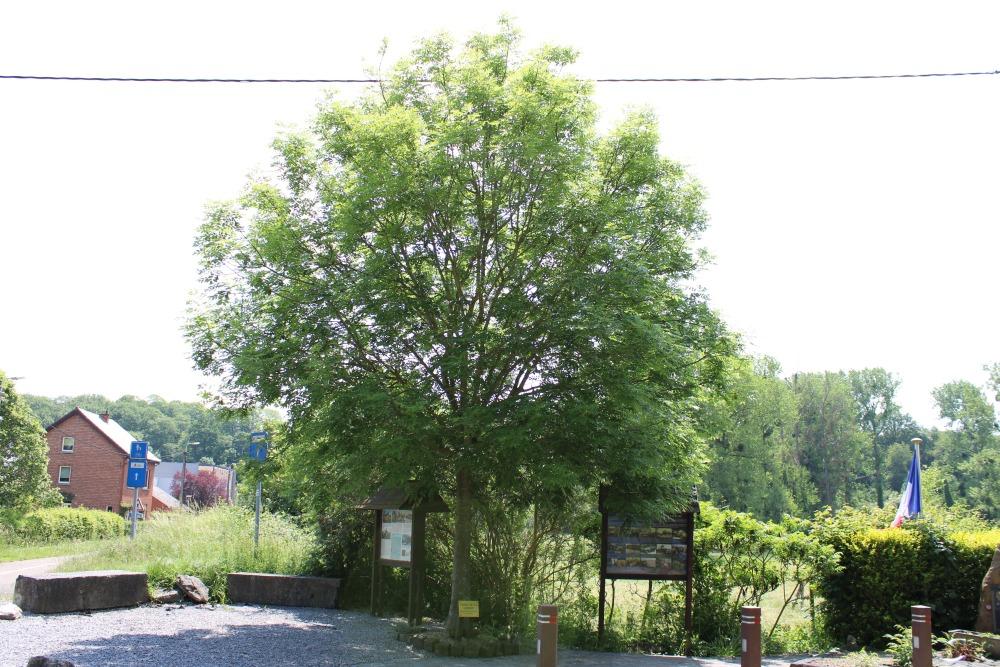 Bevrijdingsboom Fallais