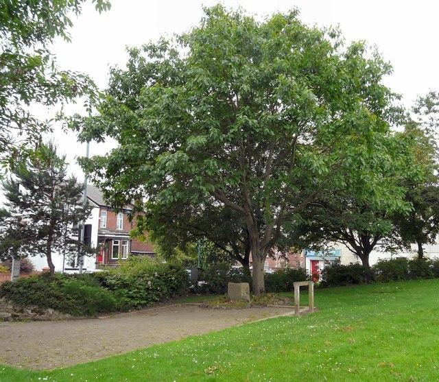 Memorial Tree Gee Cross