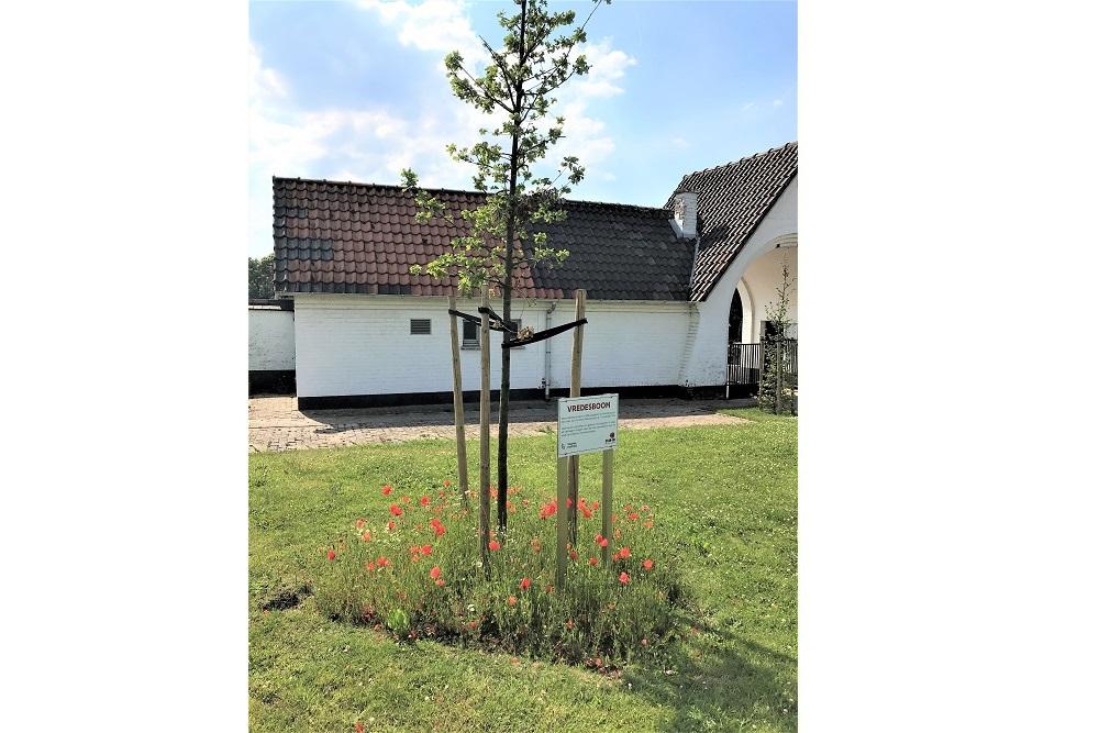 Peace Tree Lede