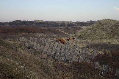 Duitse Tankversperring IJmuiden