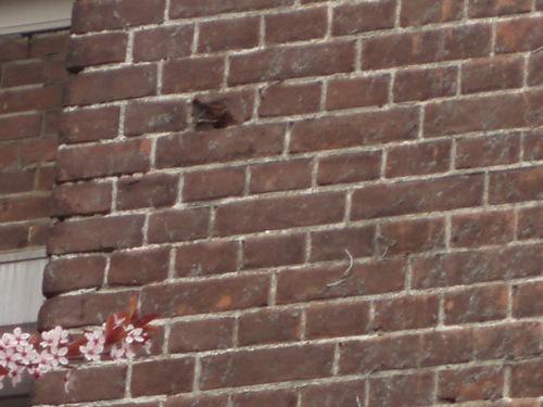 Bullet holes Willemstraat 1