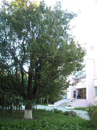 Herdenkingsboom Heldin van de Sovjet-Unie Helen Ubiyvovk