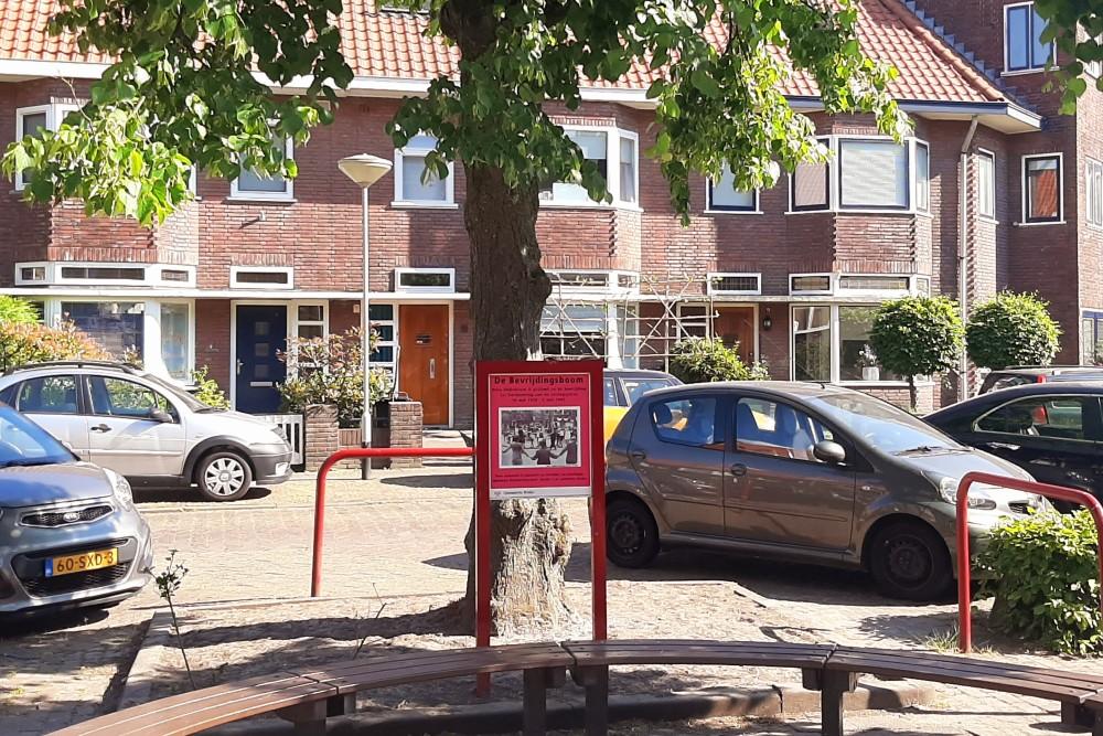Bevrijdingsboom Breda