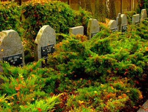 Polish War Graves Belchatow