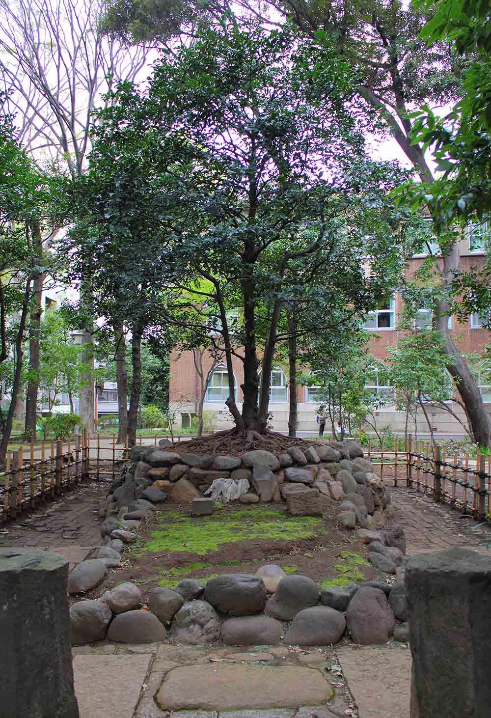 Nogi Maresuke Remembrance Tree
