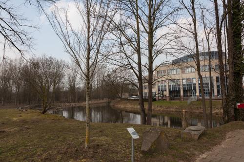 Peace Tree Roermond