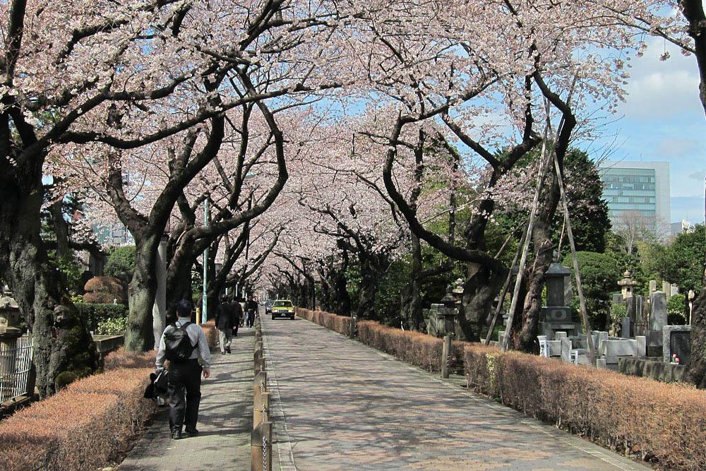 Aoyama Begraafplaats