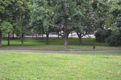 Locatie Voormalige Poolse Oorlogsbegraafplaats Friedrichshain